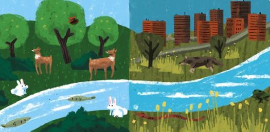Quiz On The Ecosystems