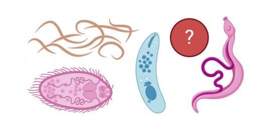 Introduction To Parasitology Trivia Quiz
