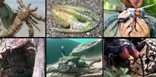 Discusses Phylum Nematode And Arthropods Quiz