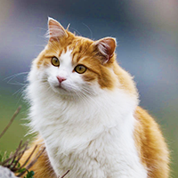 What Warrior Cat Clan Do You Belong In?