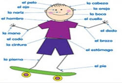 BODY PARTS IN SPANISH EPUB