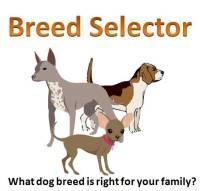 Dog Breed Selector Quiz