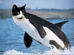 That One Weird Quiz That You Never Look At... Do Not Click On This Caticorca!