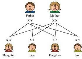ผลการค้นหารูปภาพสำหรับ what is heredity