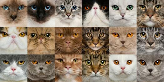Quiz: Which Cat Breed Are You?