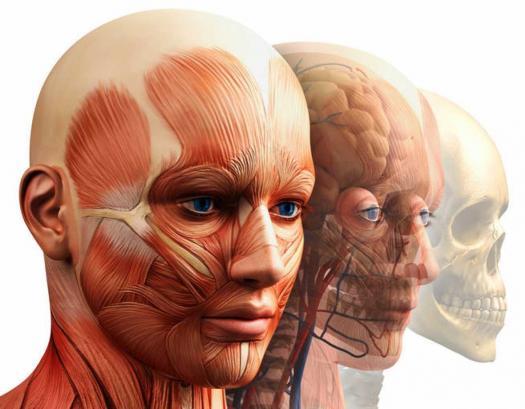Examen Anatomía De Cabeza Y Cuello #1 - ProProfs Quiz