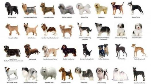 Can You Identify Breeds Of Dog?