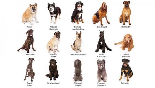 Dog Breeds -