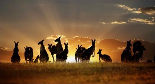How Kangaroo Are You?