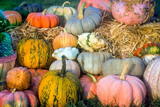 What Do You Actually Know About Pumpkins?