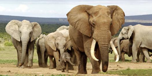 How Much Do You Know About World Elephant Day?
