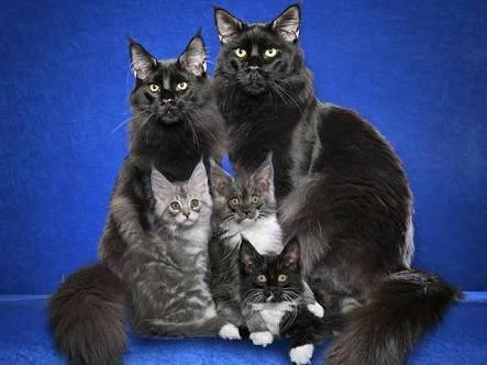 How Well Do You Know The Cat Family?