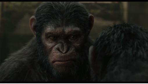 Do You Know Apes?