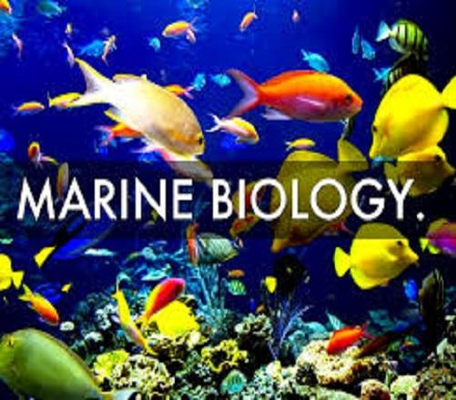 What Do You Know About Marine Biology?