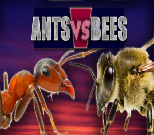 What Do You Know About Bees And Ants?
