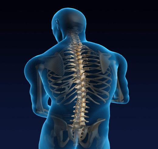 How Well Do You Know Your Spine?