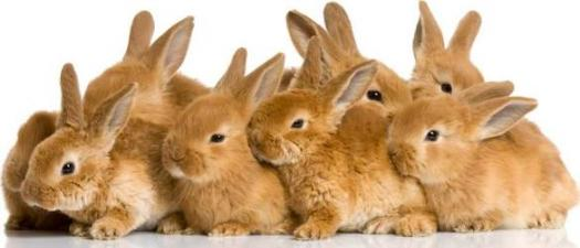 What Do You Know About Rabbits?