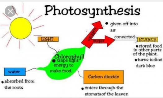 Year 7 Test - Photosynthesis