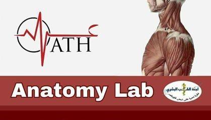 Anatomy Second Exam Simulation