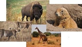 The Unbeatable Quiz On Animals!