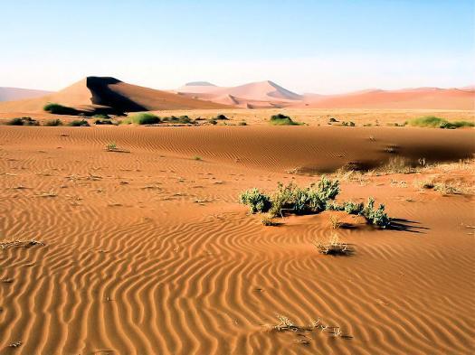 Mrc Desert Habitat Stage