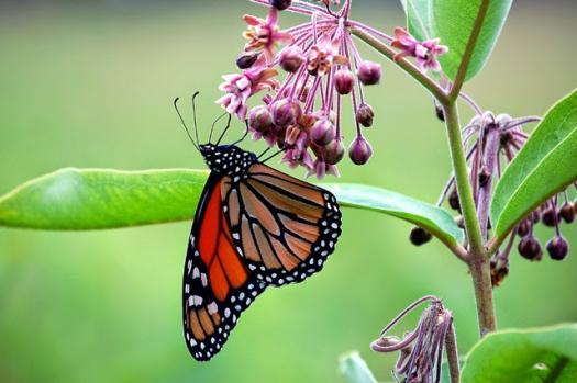 Quiz Interaksi Makhluk Hidup Dengan Lingkungan