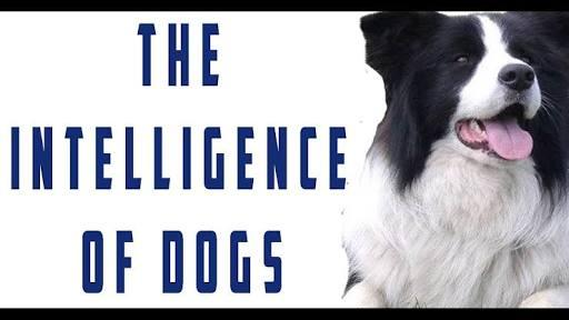 What Do You Know About The Intelligence Of Dogs Book?