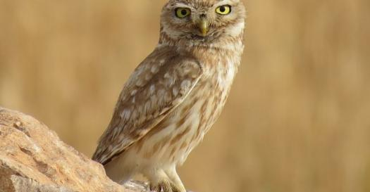 Let Learn About The Animal Owl?