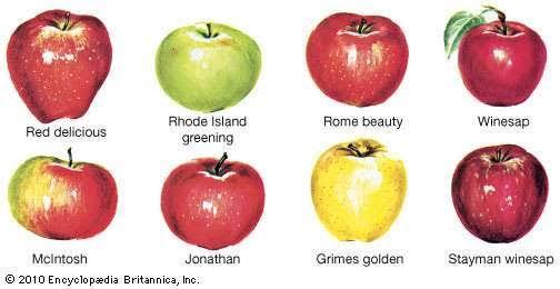 Benefits Of Apple Juice Quiz