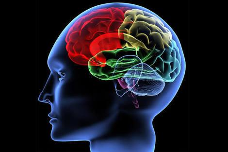 Your Brain Question And Answer Quiz