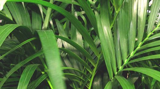 Quiz About Plant Arithmetic