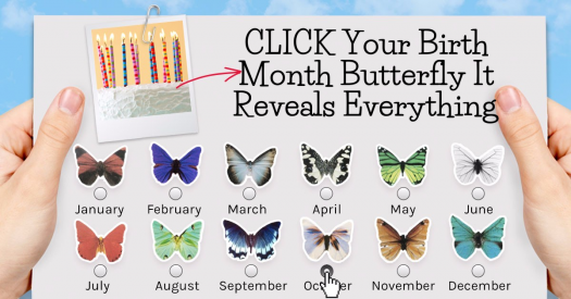 Find Out What Your Birth Month Butterfly Reveals About You?