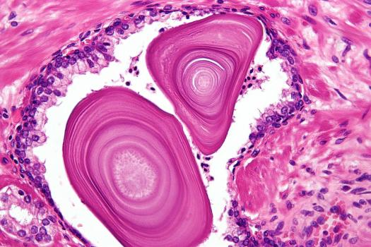 Histology Quizzes Online, Trivia, Questions & Answers