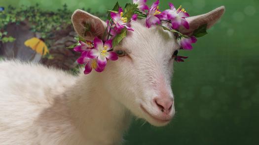 Russian Goat Quiz