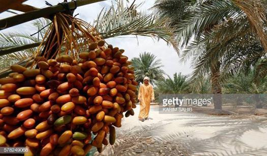 Date Palm Trivia Quiz