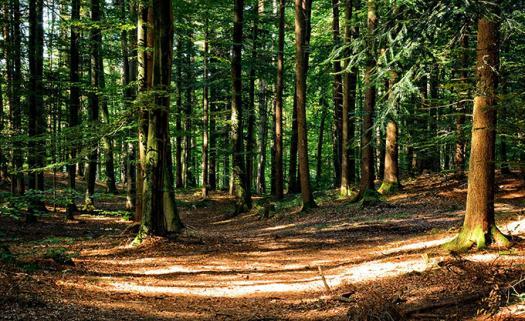 Forestry Development Trivia Questions! Quiz