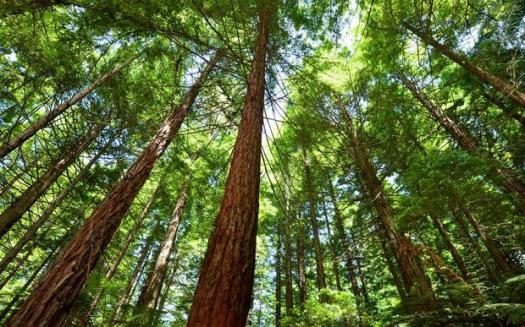 Forestry In Modern Era! Trivia Questions Quiz