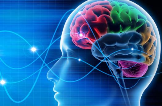 What Do You Know About Your Brain?