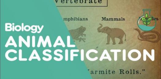 A Quick Quiz On Animal Biology! Trivia