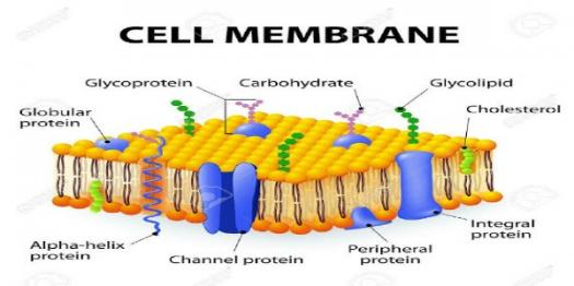 What Do You Know About Cell Membrane? Trivia Quiz