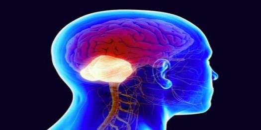 What Do You Know About Cerebellum? Trivia Quiz