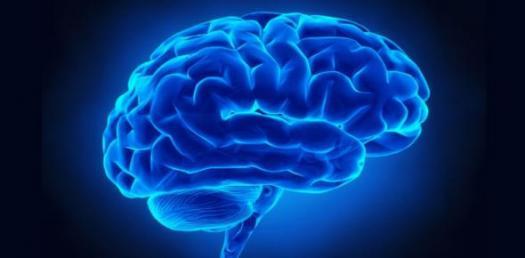 Stages Of Child Brain Development! Trivia Facts Quiz