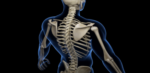 How Knowledgeable Are You About Bones?