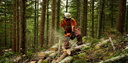 What Do You Know About Forestry?