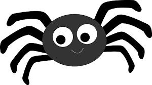 Spider Quiz