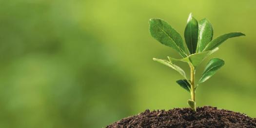 A Quick Plant Biology Quiz!