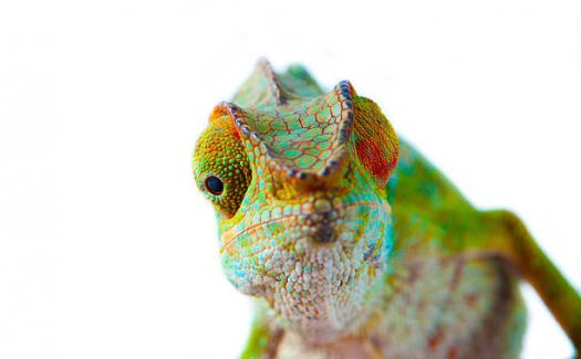 How Well Do You Know The Chameleon?