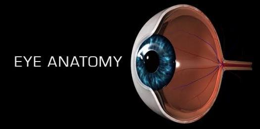 Eye Anatomy Quiz