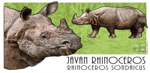 Javan Rhinoceros Trivia Quiz