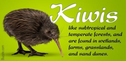 Kiwi Bird Trivia Quiz